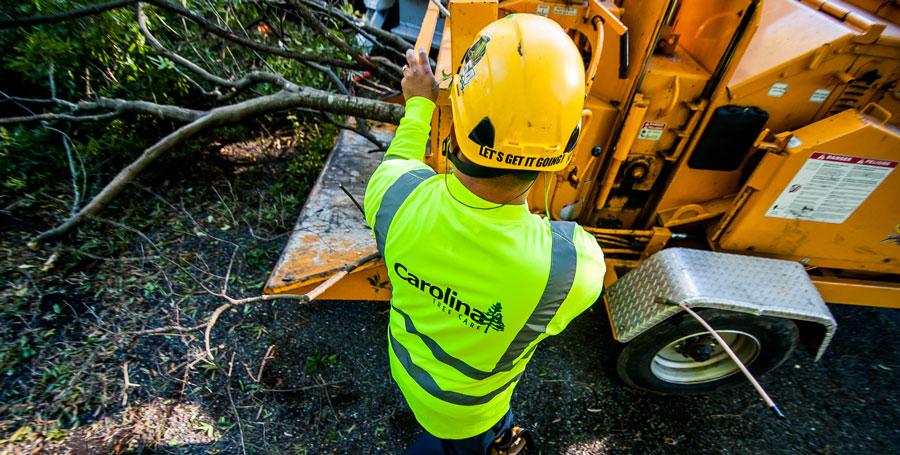 Employee working on tree shredding