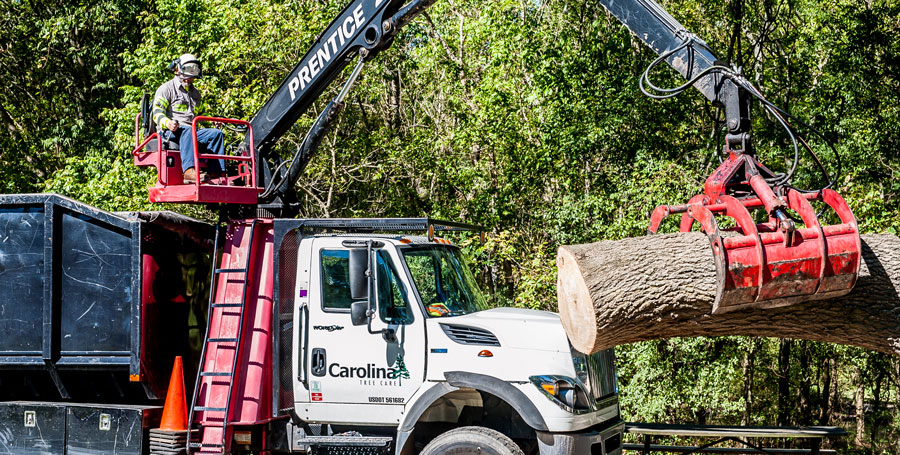 Tree removal near me Charlotte NC municipal tree service
