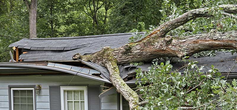 Felled tree during a storm destroys house