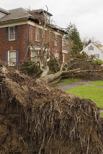 Fallen tree near a house