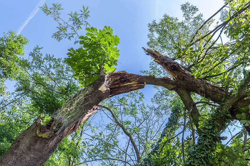 Damaged trees require tree care from trained arborists to ensure the health of the trees