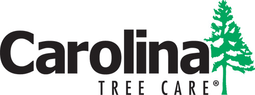 Carolina Tree Care Tree Service