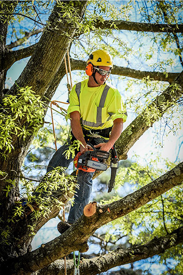 Tree pruning and crown cleaning