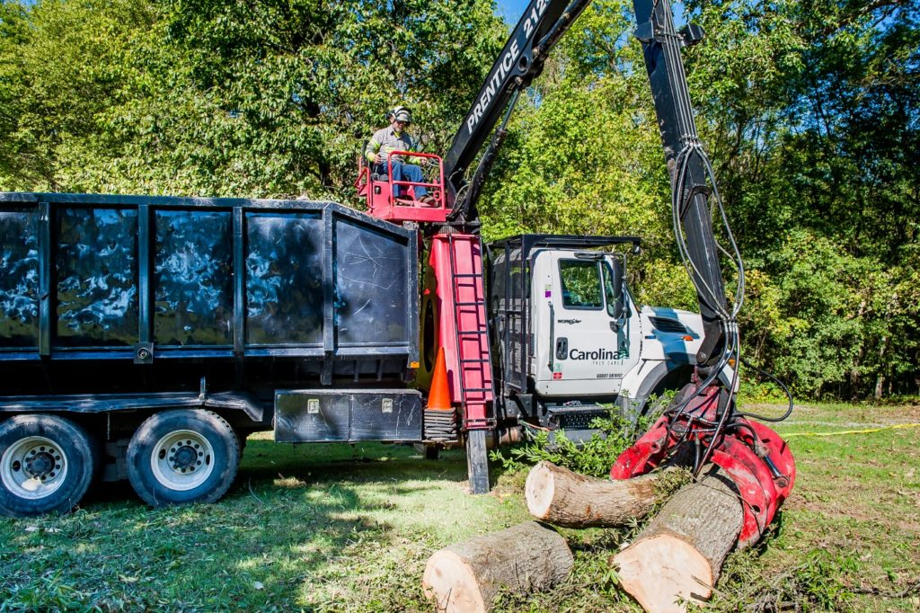 tree removal, tree remvoal, cut down tree, chop tree, chainsaw, tree felling, safely remove tree, debris removal, haul debris, stump flushing, stump grinding, replanting new tree, tree removal services, tree services, tree grinder, stump grinding services