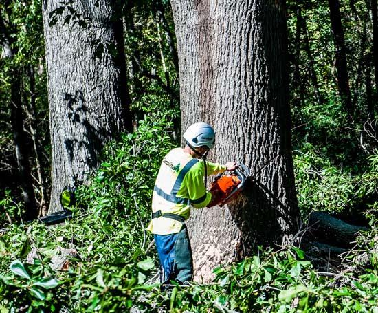Charlotte NC tree removal