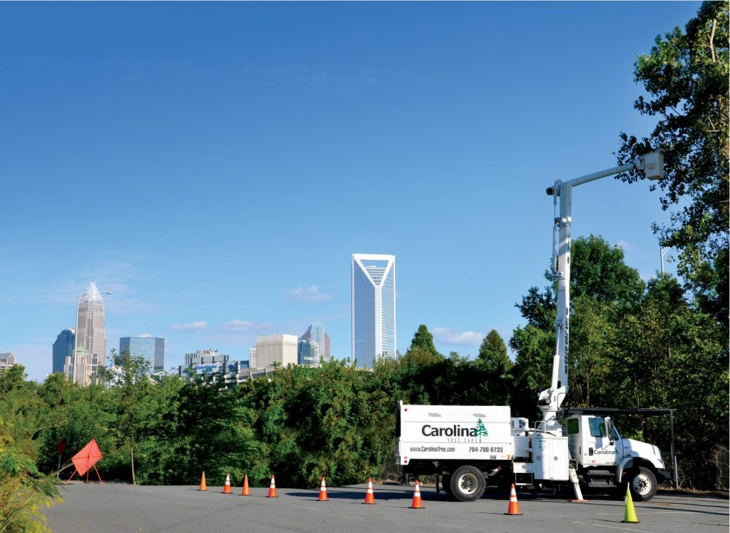 Carolina Tree Care providing municipal tree care for the city of Charlotte NC