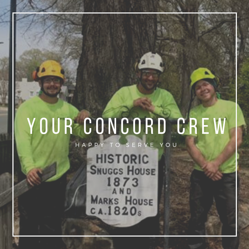 Concord NC tree trimmers