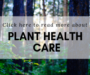 Carolina Tree Care offers plant health care in Charlotte, NC
