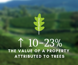 NC Tree Services are a wise investment