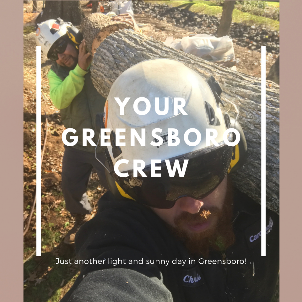 certified arboritst in greensboro nc