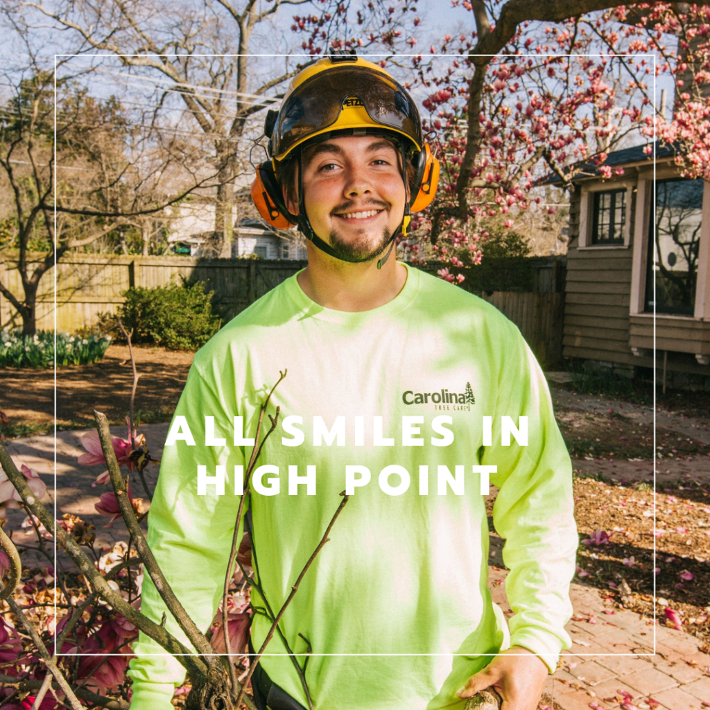 High Point Tree Service Near Me