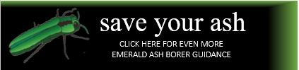 Save your North Carolina ash from Emerald Ash Borer