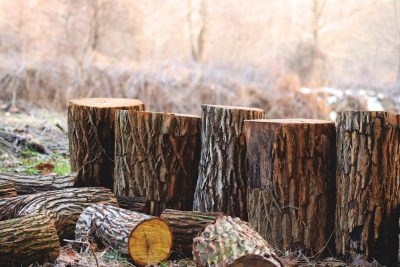 Tree Removal Prices in Concord, NC
