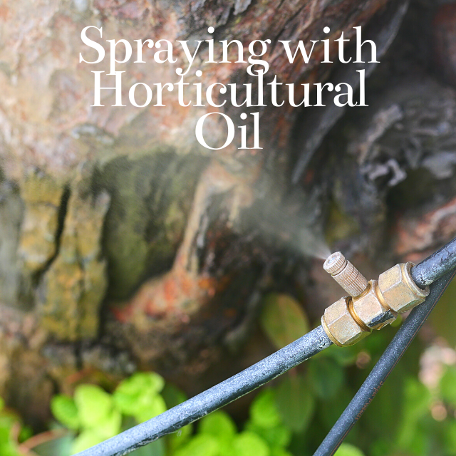 spraying trees with horticultural oil in north carolina