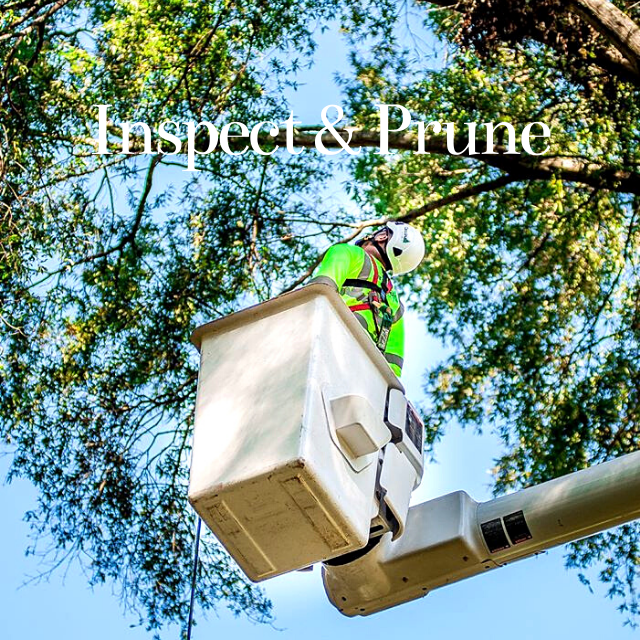 inspect and prune your trees in the winter in charlotte north carolina