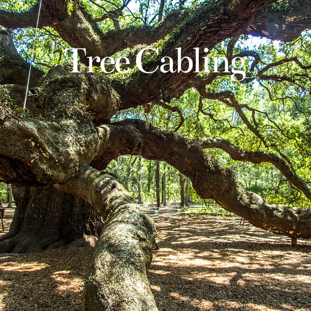 tree cabling to protect your north carolina trees