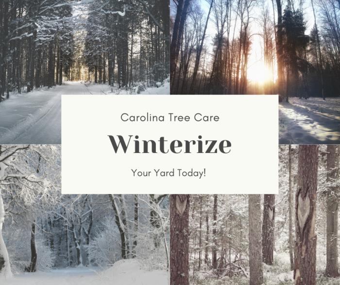 winterize your north carolina yard and trees