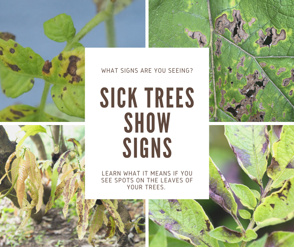signs of a sick tree