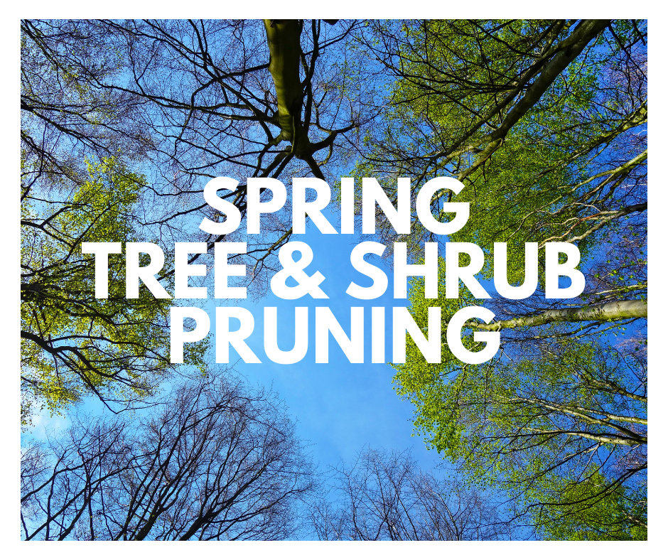 spring tree and shrub pruning in north carolina