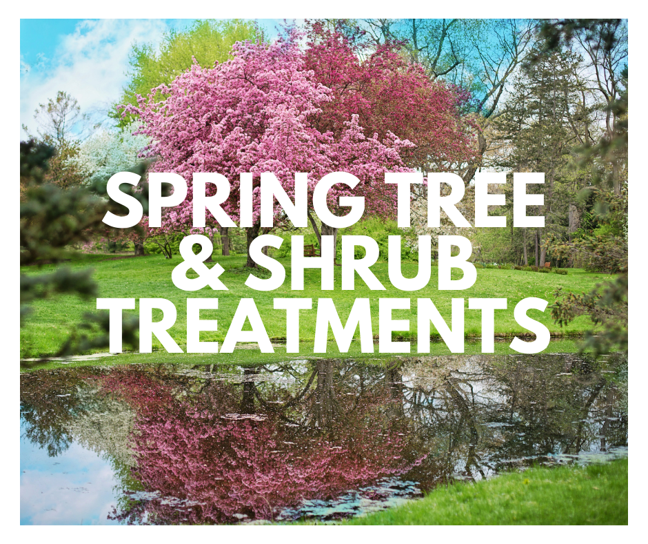spring tree and shrub treatments in Charlotte, NC