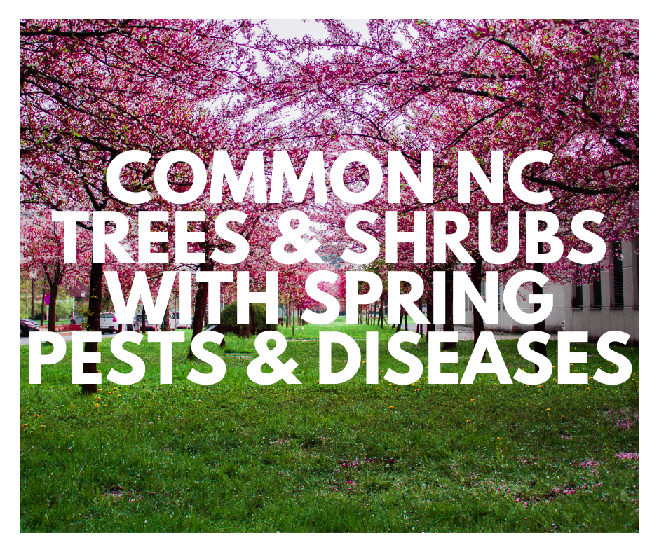 common North Carolina trees and shrubs with spring pests and diseases