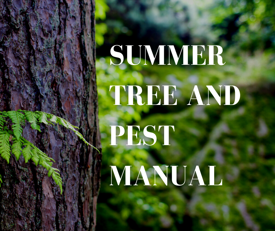 common summer tree issues in Charlotte, NC