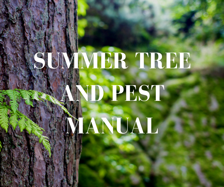 Common summer tree pests