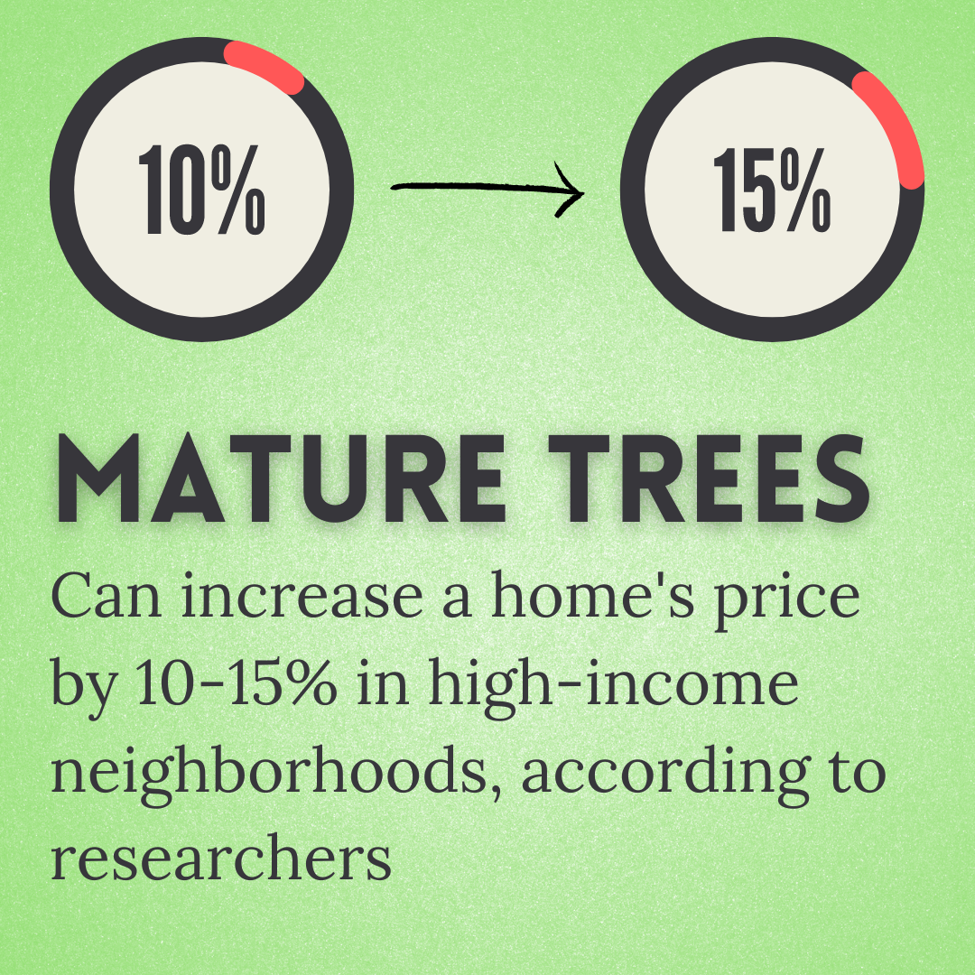 Mature trees can increase a home's price by 10-15%